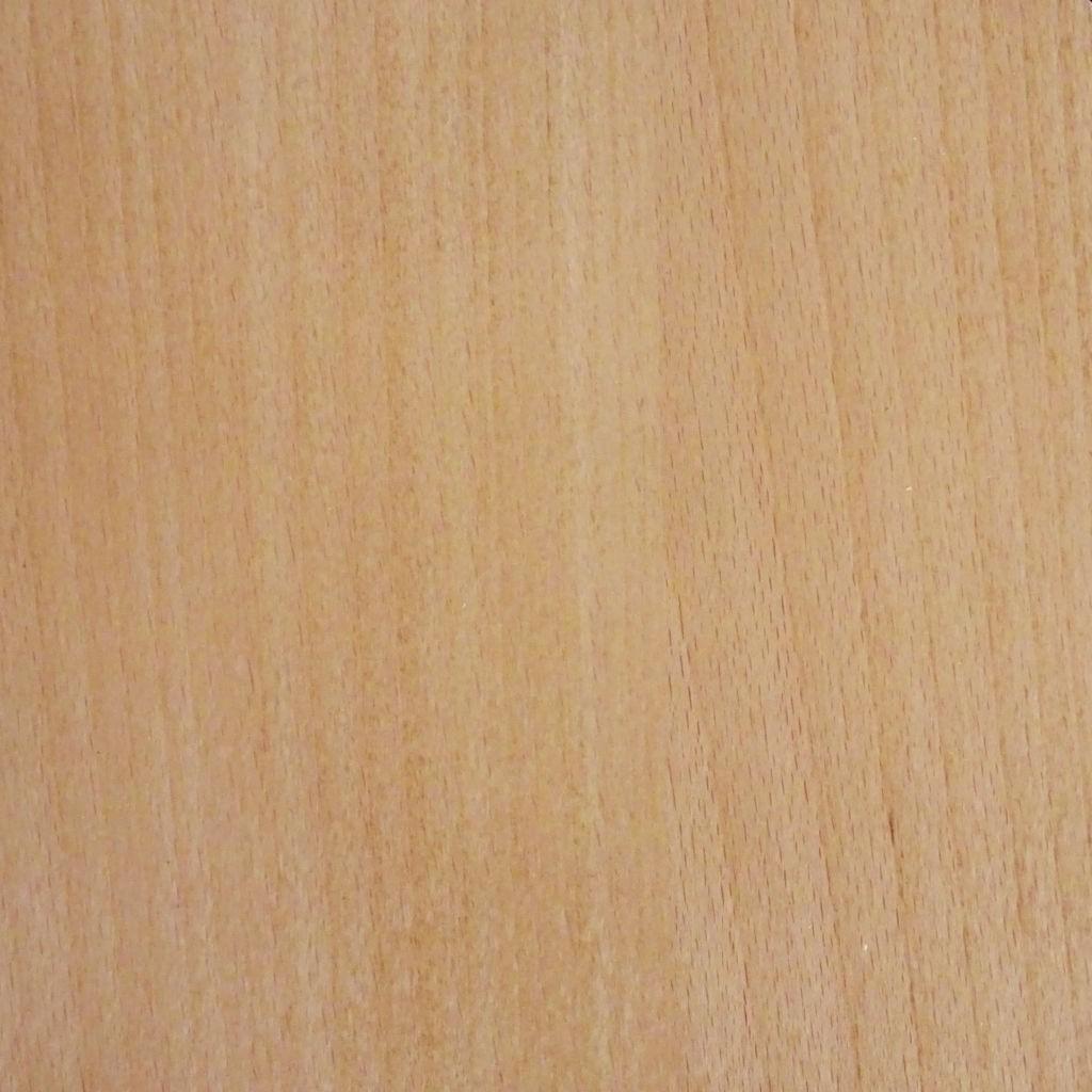 071 Beech oak dąb bukowy